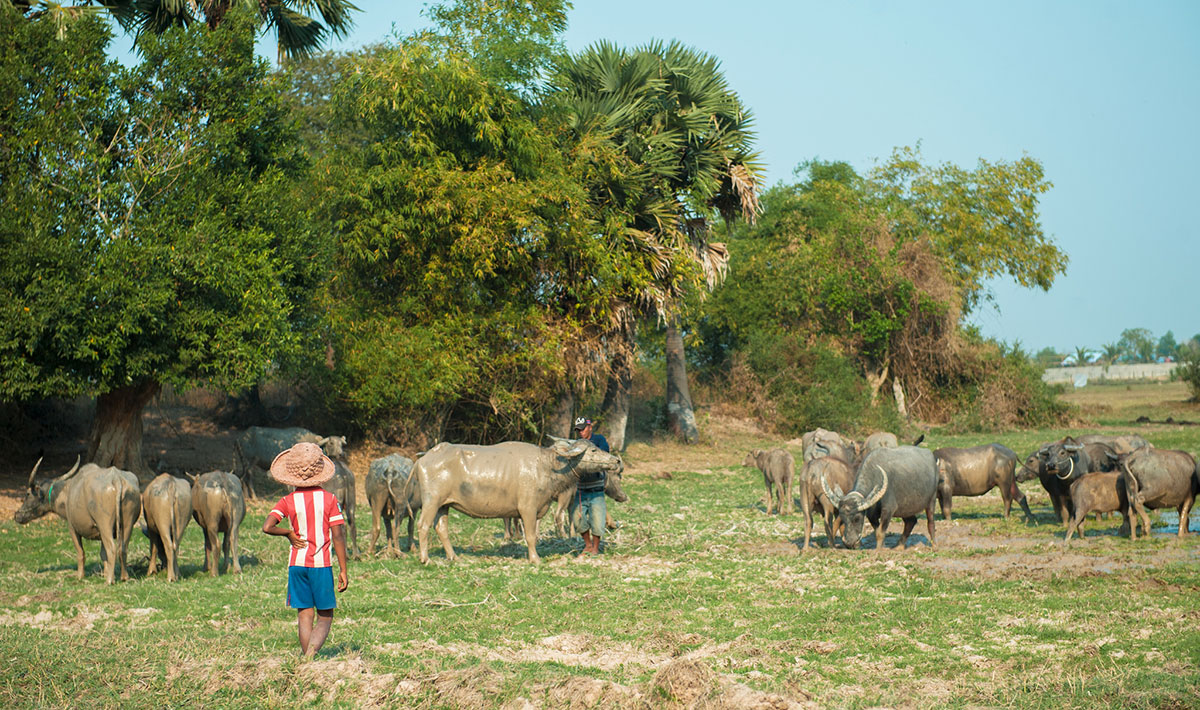 siem reap countryside