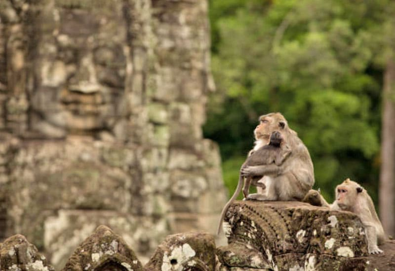 angkor wat adventure